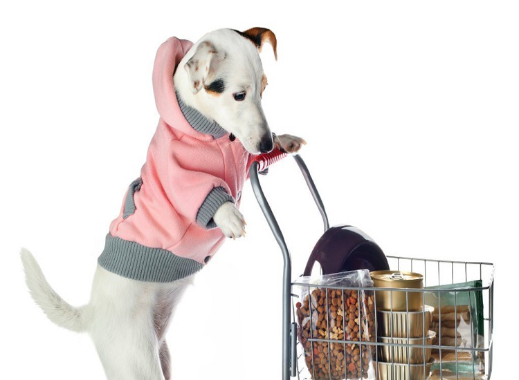 Online Pet Store and Pet Supplies with Boomerang Pet Food