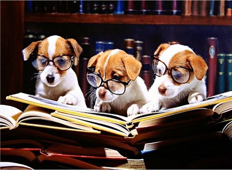 Pet Behavior School In learning